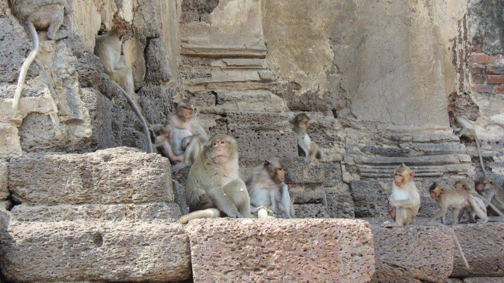 lopburi monkey temple