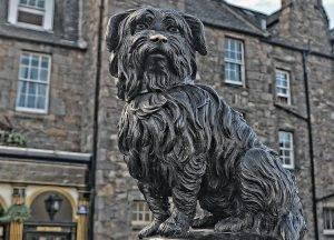Finding Greyfriars Bobby in the Old Town of Edinburgh