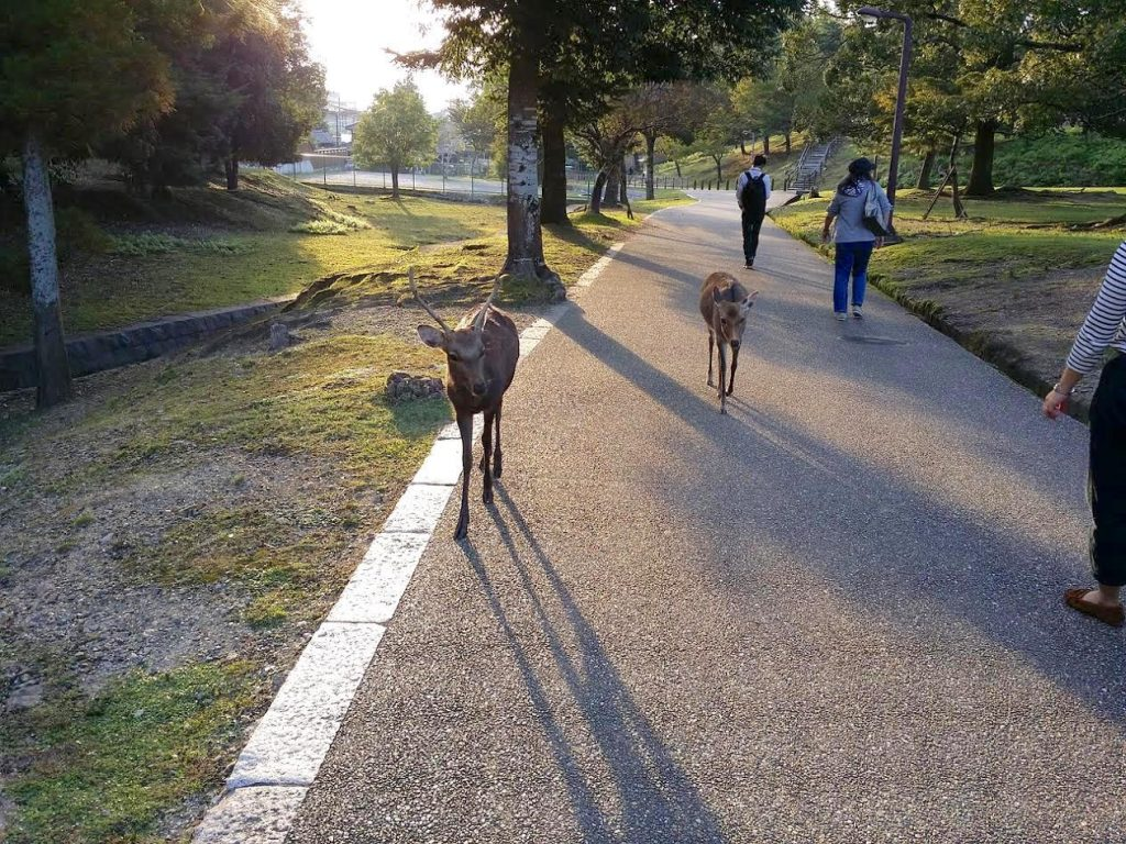 Day trips from Kyoto - Nara