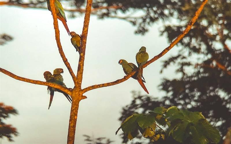 Peru Jungle Tours