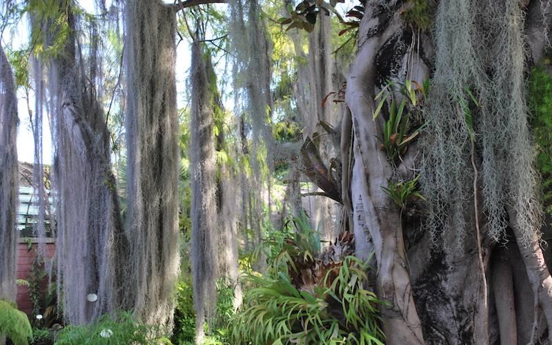 Jardin Botanico Puerto de la Cruz! Photo Essay