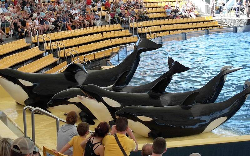 Dear Loro Parque – Why I'm choosing not to visit this Summer