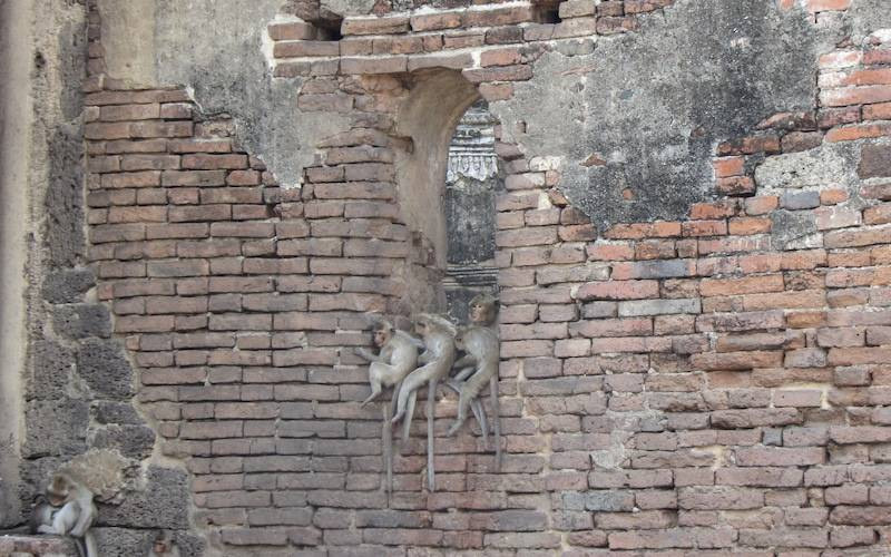 Monkeys at Lopburi Monkey Temple in Thailand